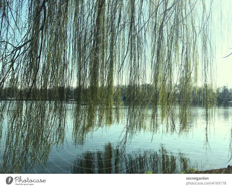nicht hängen lassen! Alsterufer Hamburg Baum Trauerweide grün Wasser blau Reflexion & Spiegelung Farbfoto Außenaufnahme See Menschenleer Tag Himmel ruhig