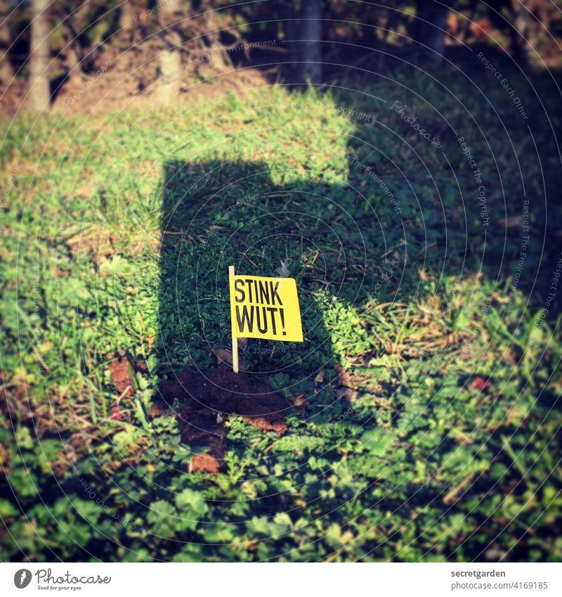 Scheiss Foto scheiße Kot Haufen Ekel dreckig Farbfoto Außenaufnahme Menschenleer Tag Tier Umwelt Ausscheidungen Hund Stadt Haustier braun grün rasen Ironie