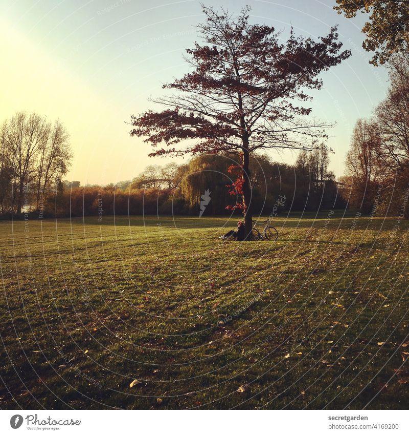 goldener Lieblingsplatz Baum Wiese allein Fahrrad Sonnenuntergang genießen warm Feierabend herbstlich Herbst Herbstlaub rot gelb grün Herbstfärbung Natur
