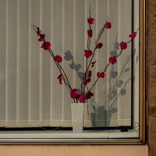 Plastikblumen mit elektrischer Beleuchtung in einem trostlosen Bürofenster Kunstblume Kunstblumen plastikblumen Dekoration & Verzierung Farbfoto Kitsch