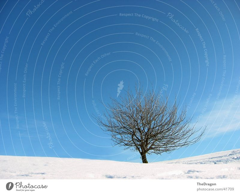 Winterbaum - winter tree Baum Weitwinkel weiß Ebene Schneelandschaft kalt ruhig Erholung Himmel blau Landschaft Ferne snow wide angle sky. blue white landscape