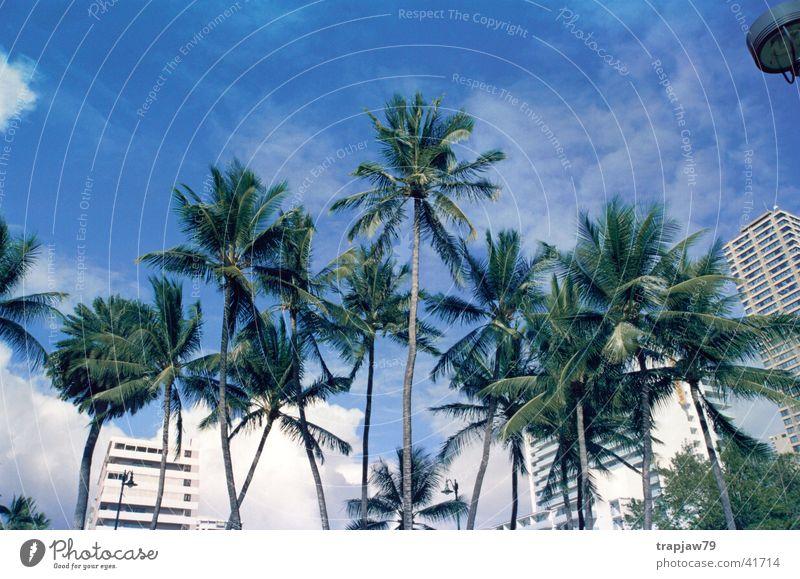Paradise City Palme Stadt Ferien & Urlaub & Reisen Hawaii Baum Himmel Erholung