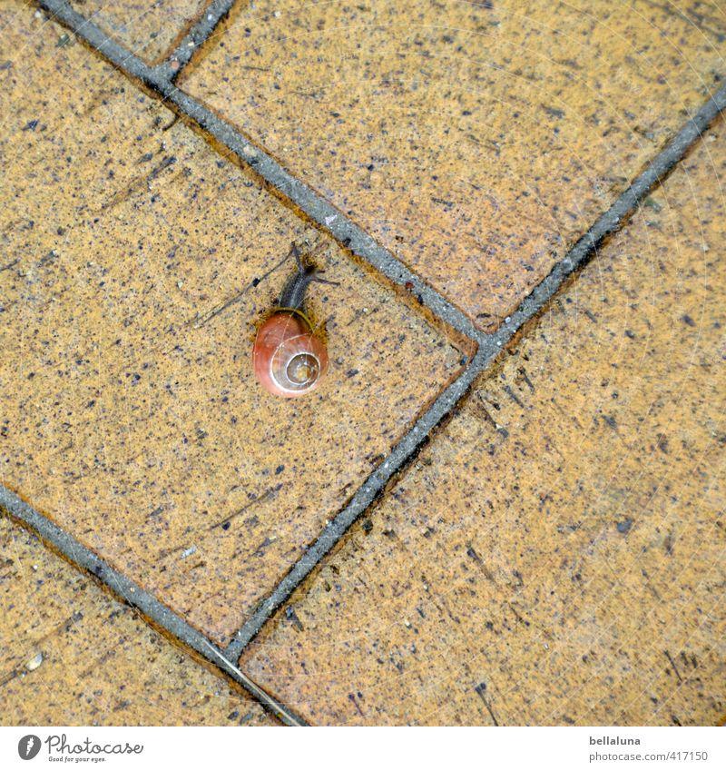 Immer an der Wand lang - oder am Boden. Umwelt Natur Tier Erde Sommer Schönes Wetter Menschenleer Wildtier Schnecke 1 krabbeln braun schwarz Bodenbelag