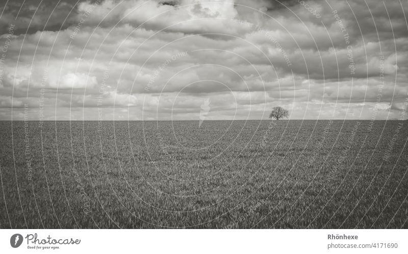 Minimalismus .. ein einsamer Baum mit Wolken verhangen Himmel minimalistisch Baum Himmel Außenaufnahme Menschenleer Tag Natur ruhig Schwarzweißfoto Landschaft