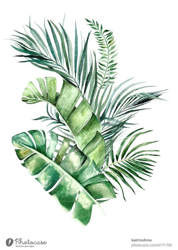Aquarell tropische Blätter Bouquet Illustration Wasserfarbe grün Blumenstrauß Zeichnung Grafik u. Illustration Fensterblätter Handfläche Banane Wurmfarn