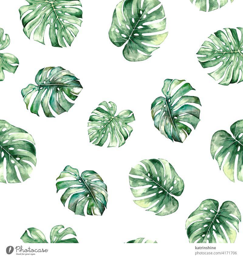 Aquarell monstera tropische Blätter seamles Muster Wasserfarbe grün übergangslos Fensterblätter Zeichnung Grafik u. Illustration Dschungel Papier botanisch