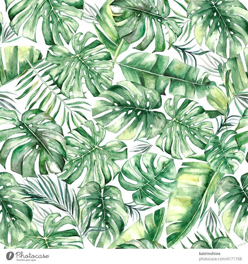 Aquarell tropische Blätter nahtlose Muster Wasserfarbe grün übergangslos Fensterblätter Handfläche Wurmfarn Banane Zeichnung Grafik u. Illustration Dschungel