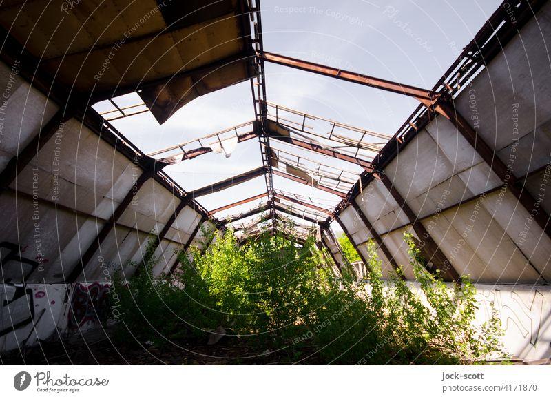 Grün wirkt verloren im Raum lost places Verfall Architektur Zahn der Zeit Strukturen & Formen Wandel & Veränderung Endzeitstimmung Ruine kaputt Symmetrie