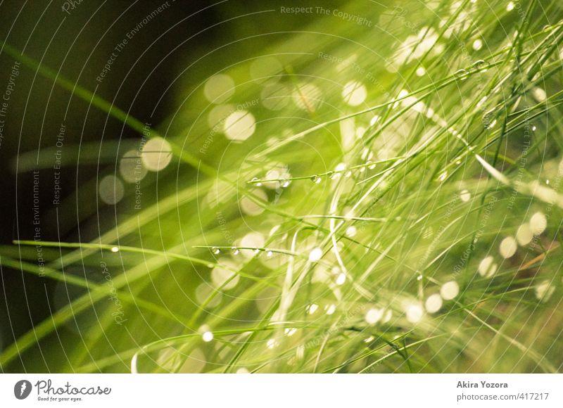 little diamonds Natur grün weiß schwarz Wiese Gras Zusammensein glänzend Idylle frisch nass Wassertropfen Regenwasser Optimismus