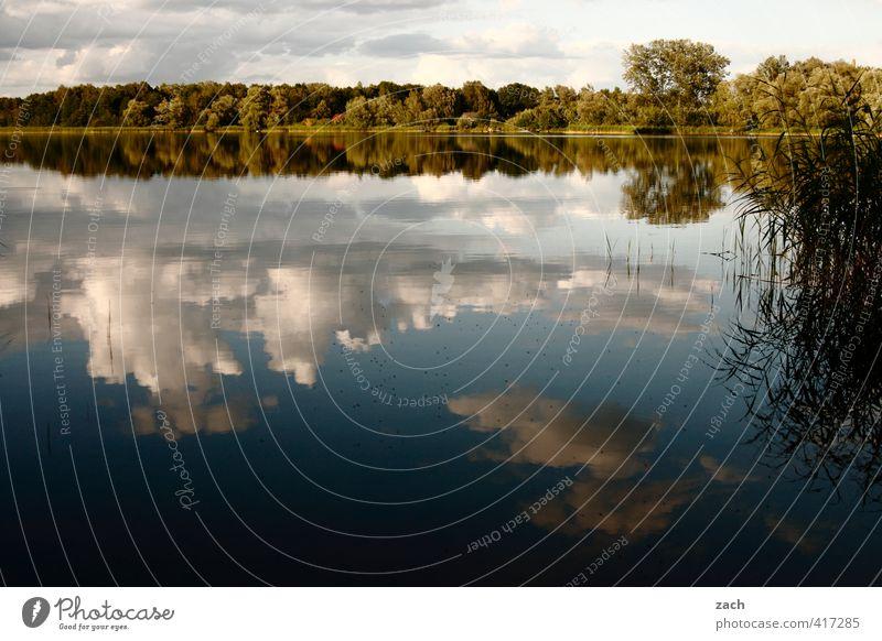 SeelenRuhe Wassersport Schwimmen & Baden Umwelt Natur Landschaft Himmel Wolken Frühling Sommer Schönes Wetter Baum Wald Küste Seeufer Flussufer Teich Erholung