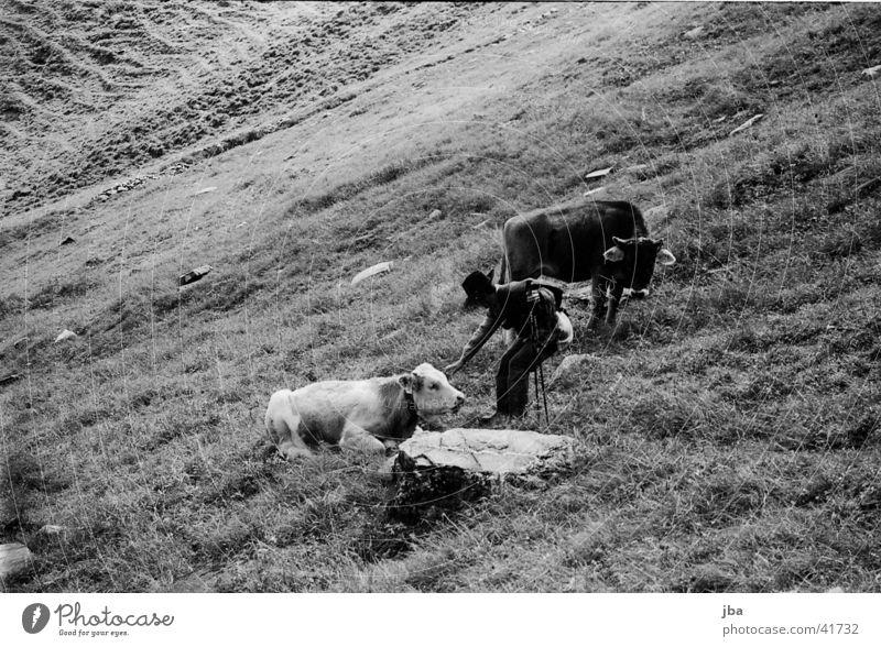 Bergbauer_1 Einsamkeit Berge u. Gebirge Landschaft Landwirt Alm Rind