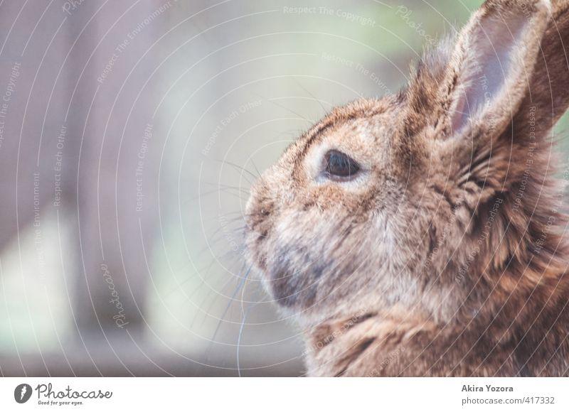 breathing air Tier Haustier Tiergesicht 1 atmen beobachten entdecken kuschlig niedlich weich braun grau grün orange schwarz weiß achtsam Natur Hase & Kaninchen