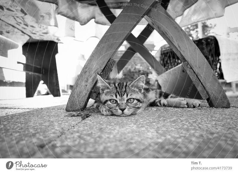 ein ganz kleiner Kater liegt unter einem Holztisch im Garten Katze kitten Taby Tier Haustier Fell Hauskatze Tierporträt Blick Tiergesicht Katzenkopf beobachten