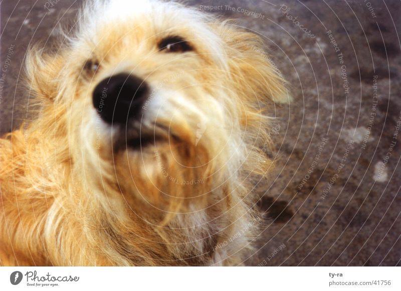 Streuner Tier Hund Fell Fuerteventura Kanaren