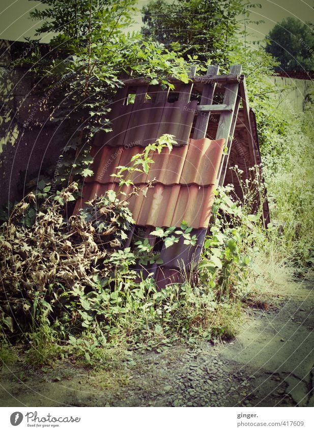 Köln UT | Zollstock | Ein Haus im Grünen Umwelt Natur Pflanze Sommer Schönes Wetter Sträucher Blatt Grünpflanze Hütte Gebäude Mauer Wand Dach alt dreckig dunkel