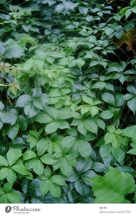Grün grün Blatt Pflanze