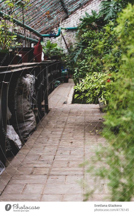 Gewächshaus Gewächshaus sonnigen Innenraum voller frischer Grünpflanzen. Moderne Innenarchitektur Design. Natural Indoor dekorative Pflanzen. Üppiger botanischer Garten. Schöne Frühling Hintergrund.