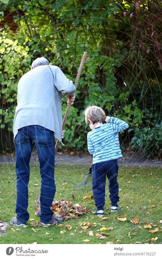 ein tolles Team - Rückansicht von Opa und Enkel, die im Garten Laub harken Großvater Kind Kleinkind Herbst gemeinsam zwei Menschen Gartenarbeit Hobby Freizeit