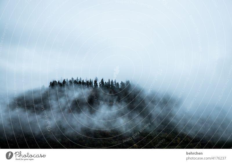 wolkenwald geheimnisvoll mystisch melancholisch melancholie düster Wald beeindruckend Nebel Bäume Ferien & Urlaub & Reisen Umwelt Himmel Hunsrück herbstlich