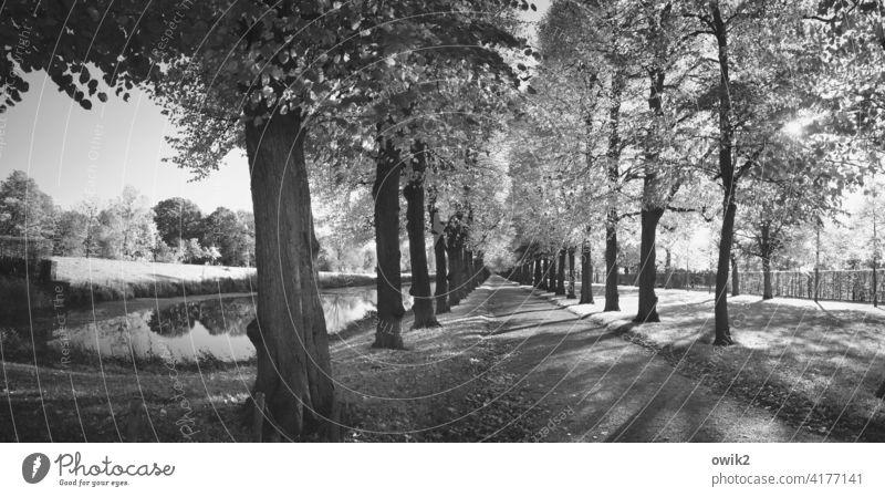 Herrenhäuser Gärten Barockgarten Park Schwarzweißfoto Idylle Totale Sehenswürdigkeit historisch berühmt Schönes Wetter Flora Umwelt Baum Landschaft Schatten