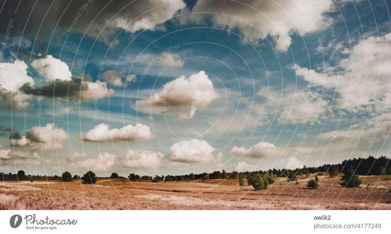 Lüneburger Heide Idylle Herbst Schönes Wetter Sträucher Horizont Wolken Himmel Pflanze Landschaft Natur Umwelt Freiheit Ferne Ausflug Ferien & Urlaub & Reisen