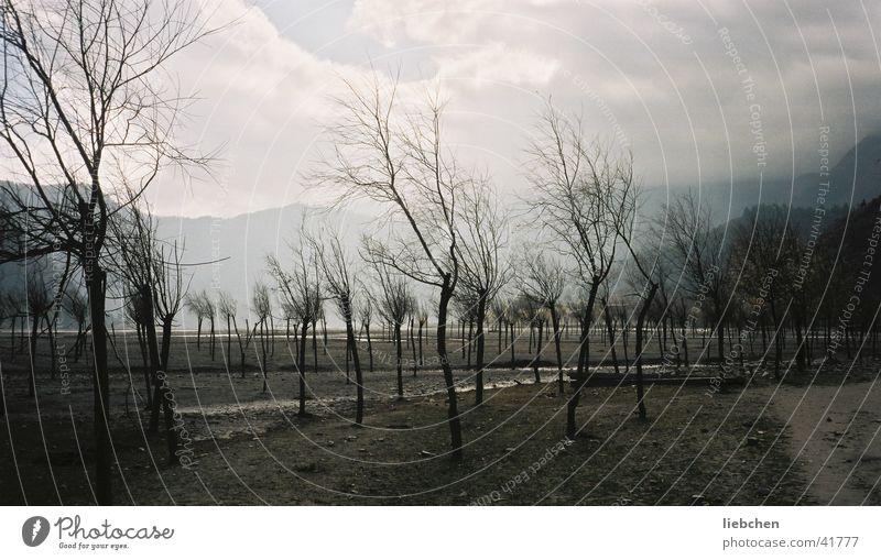 tatsächlich Apfelbäume Baum Berge u. Gebirge Tal Apfelbaum Nepal