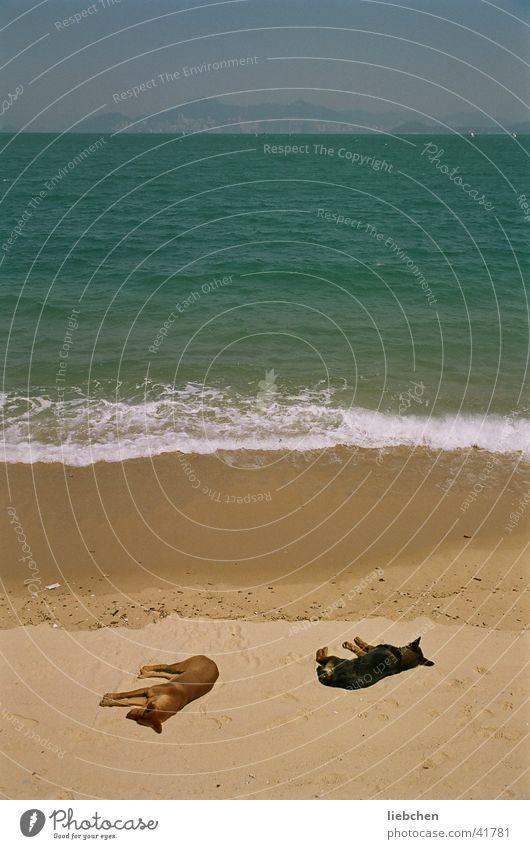 keine schlafenden Hunde wecken! Sonne Meer Strand Hund Sand Wellen Verkehr