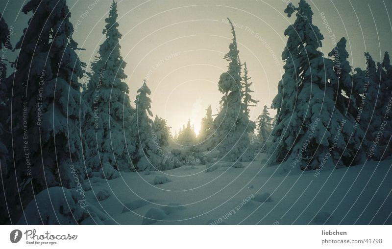 Winterkitsch Baum Sonne Winter Schnee Berge u. Gebirge Schneekuppe