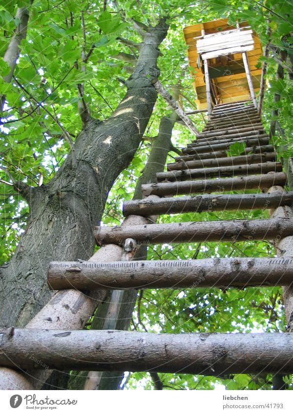 Himmelsleiter Baum grün Wald Holz Leiter Hochsitz