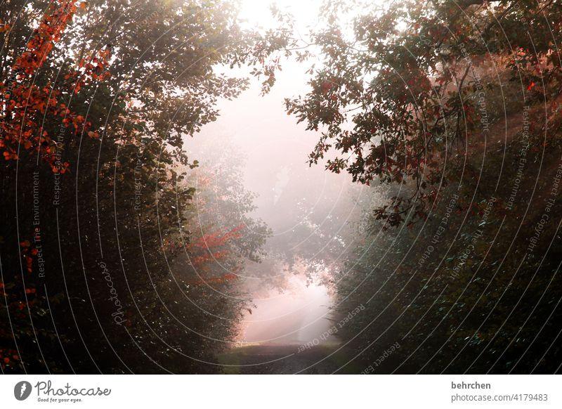 am ende ist licht Herbst Herbstwetter fallende Blätter Sonnenlicht Herbstlandschaft Farbfoto Fußweg schön fantastisch Kontrast Außenaufnahme Licht Wald