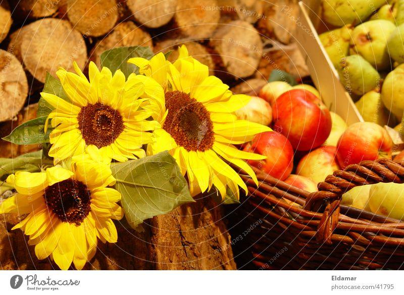 Ernte Herbst Sonnenblume Blatt Erntedankfest Korb Holz Apfel Gaben herbstlich Garten Frucht Sommer
