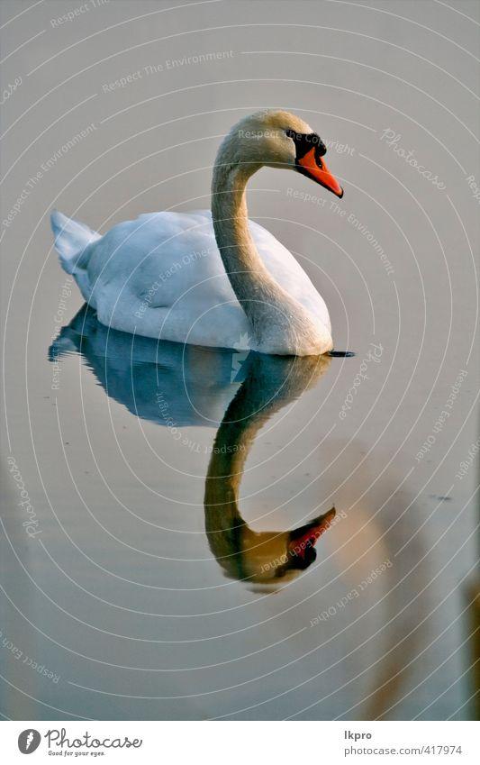 Natur Ferien & Urlaub & Reisen blau grün weiß Tier schwarz gelb grau Linie braun Vogel rosa dreckig Ausflug Feder