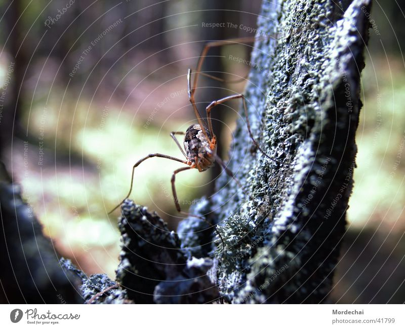 Spider Natur Wald Insekt Spinne Spinnennetz