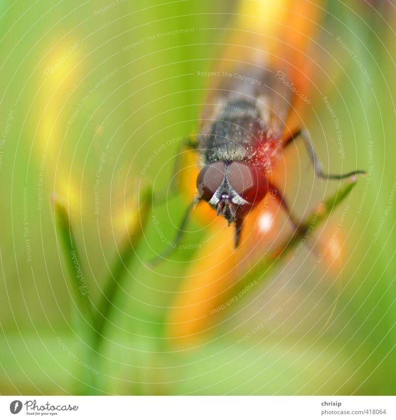 was guckst du? Natur grün Pflanze Landschaft Tier schwarz Umwelt Auge Gras Garten Beine fliegen orange sitzen Wildtier