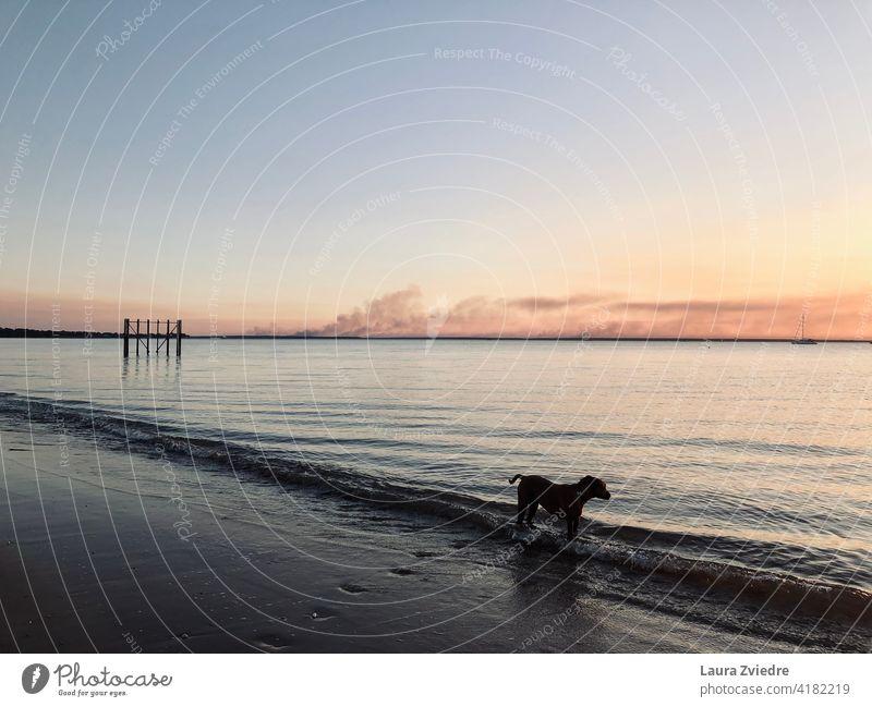 Der Rauch, Hund und das Meer im Sonnenuntergang Strand Hunde Familienhund Hunde am Strand Tier Tierporträt Hundeauslauf Hundeausführen Außenaufnahme
