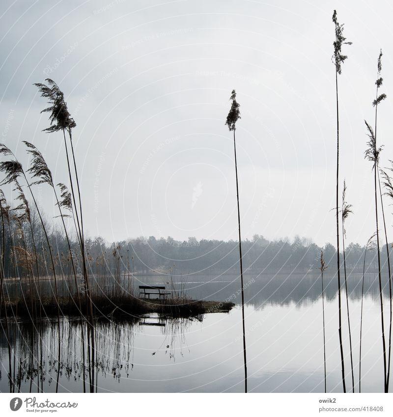 Sandbank Umwelt Natur Landschaft Pflanze Himmel Wolken Klima Wetter Schönes Wetter Baum Sträucher Riedgras Seeufer Freundlichkeit hell ruhig friedlich Frieden
