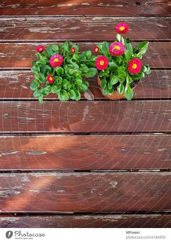 Frühling auf den Tisch Frühlingsblume Topfpflanze Holz Holztisch Menschenleer Farbfoto Außenaufnahme Pflanze Latten abgenutzt Blume Dekoration & Verzierung