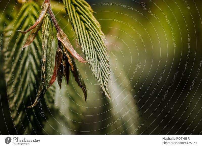 Knospe in Bäumen mit Blättern Blütenknospen Blatt Frühling Blattknospe grün Makroaufnahme Außenaufnahme Nahaufnahme Farbfoto Schwache Tiefenschärfe Wachstum