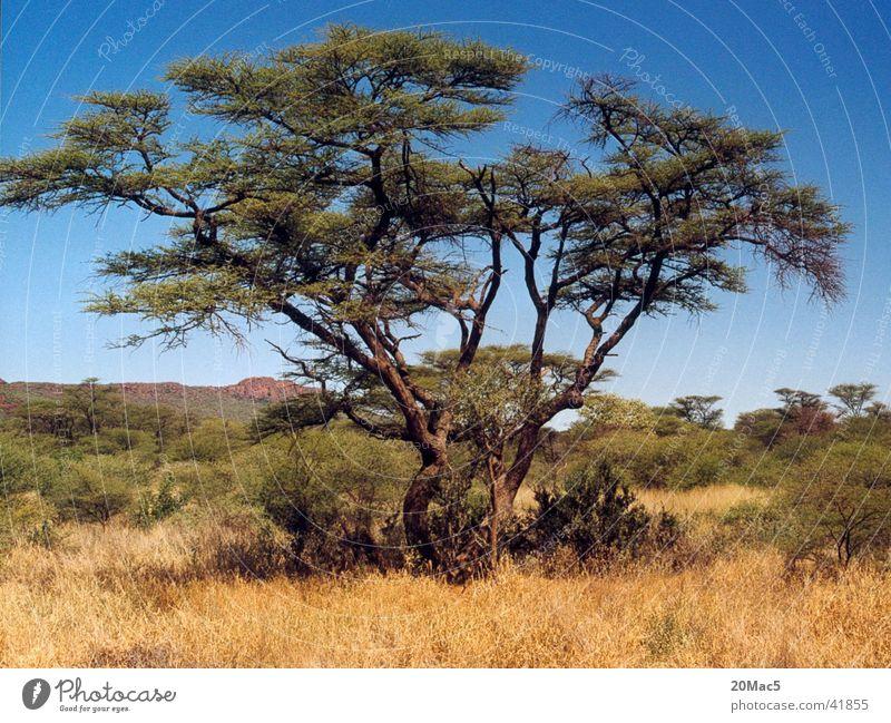 Baum Baum Wüste