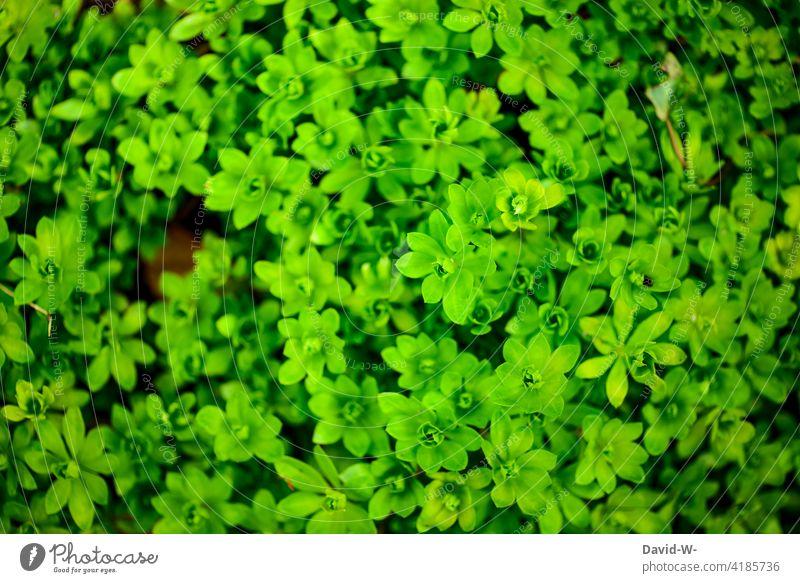es grünt so grün - Wachstum Pflanzen Frühling Natur Entwicklung wachsen Umwelt frisch