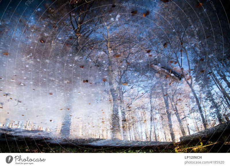 Freilichtmuseum Detmold Spiegelung im Wasser Bäume Märchenhaft Märchenwald Natur Surrealismus Umwelt Winterstimmung Reflexion & Spiegelung gefroren Landschaft