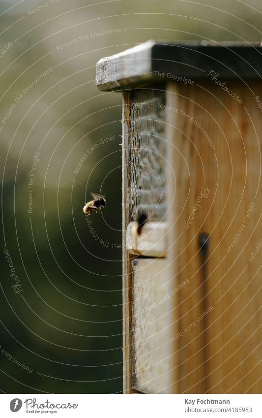 Wildbiene fliegt in Insektenhotel Tier Biene Wanze Wanzenhotel Erhaltung Landschaft Tag ökologisch Ökologie Umwelt Rahmen Garten Gartenarbeit Lebensraum