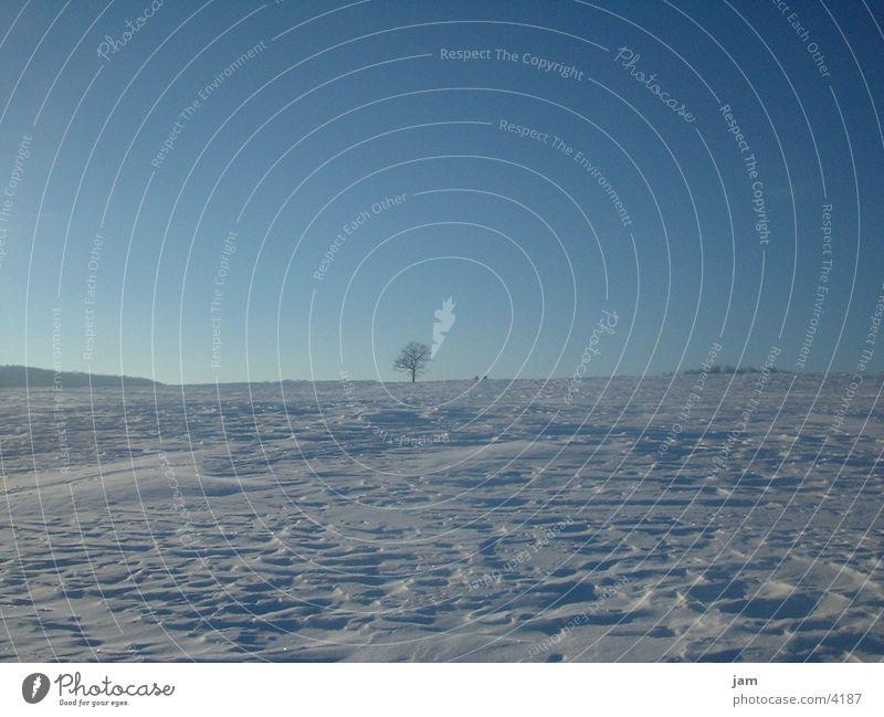 Winterstimmung Baum Schnee Horizont