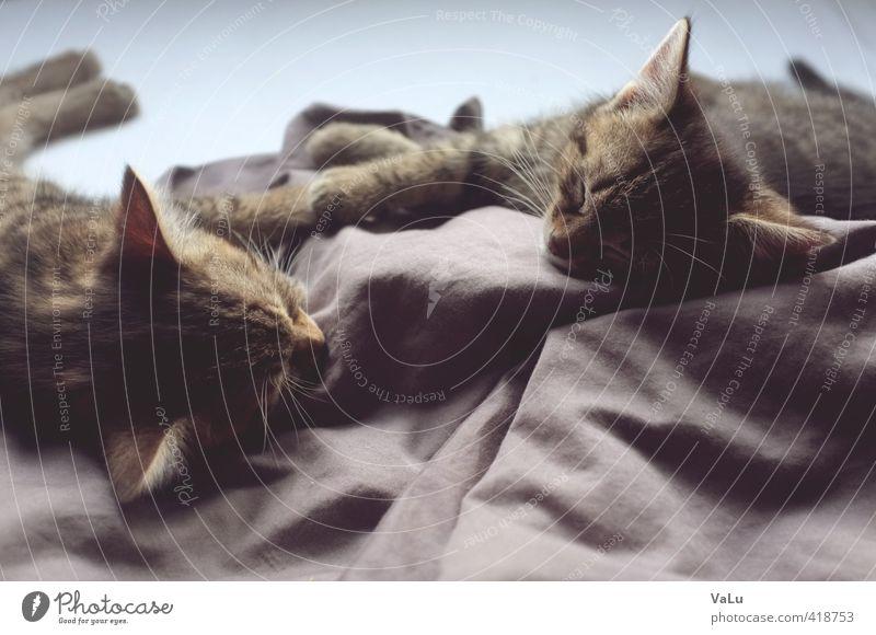 afternoon nap Katze Erholung ruhig Tier Wärme Tierjunges Glück träumen Freundschaft Zufriedenheit Tierpaar Warmherzigkeit schlafen Bett Fell Haustier