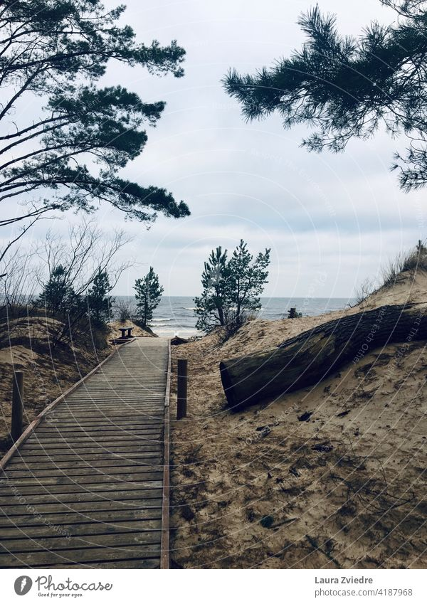 Hölzerner Strandpfad, der zum Strand führt Strandweg Weg Sand Sandstrand Kiefer Kiefern Baum MEER Ostsee Ostseeküste Ostsee Urlaub Umwelt Küste Küstenlinie