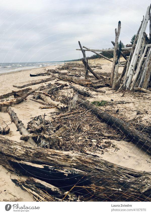 Treibholz am Strand Strandleben Sand Holz alte Bäume MEER Küstenlinie Wintertag Ostsee Wasser Sandstrand bewölktes Wetter Wolkenhimmel Ferne Umwelt