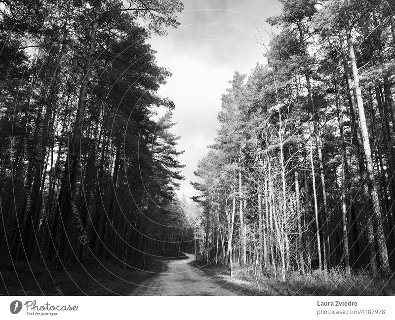 Straße durch den Oine-Wald Kiefernholz Holz Natur Baum Bäume Landschaft Außenaufnahme Umwelt Schwarzweißfoto Pflanze Tag Menschenleer keine Menschen