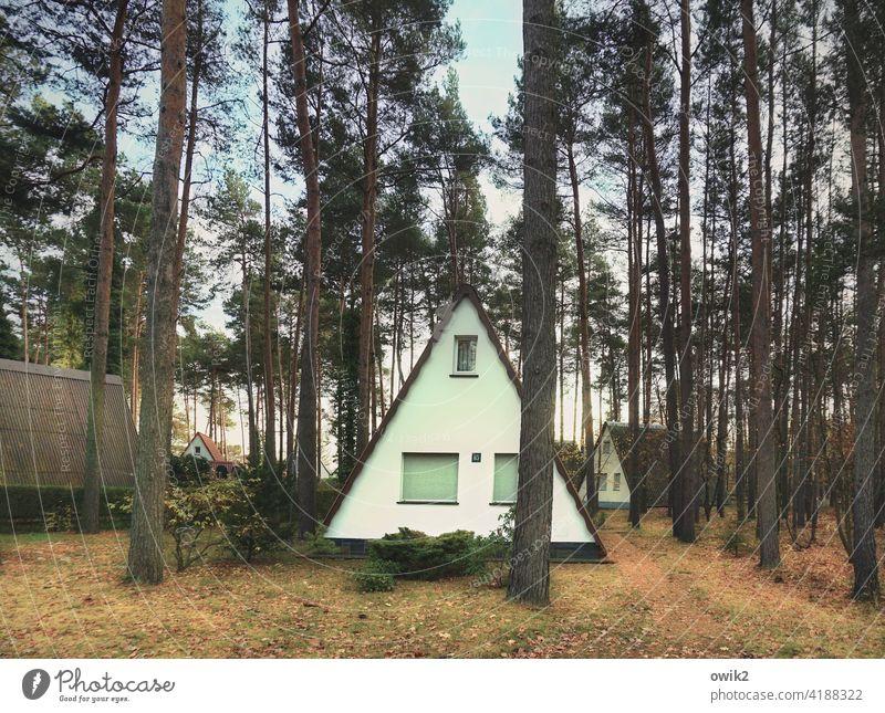 Dreiecksverhältnis Feriensiedlung Bungalows Natur Farbfoto Außenaufnahme einfach Erholung Wald Baum Landschaft Dachschräge Ferienhütte Ferienhaus Baumstämme