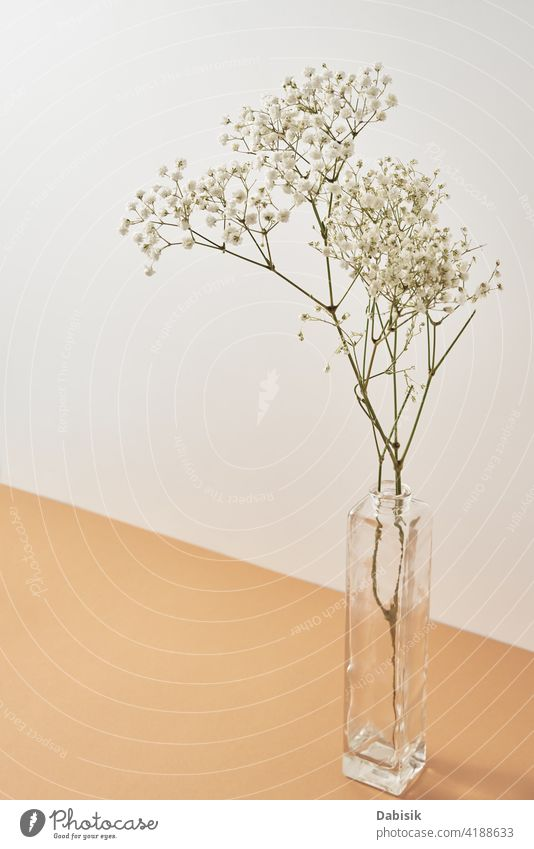 Pflanze in Vase auf pastellbeigem Hintergrund Ast dekorieren Lifestyle grün Blume Blumenstrauß Raum Design Innenbereich lebend altehrwürdig Wand weiß Schönheit
