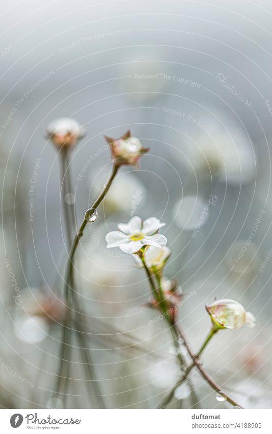Kleine weiße Blüten mit Regen Tropfen Ast Pflanze Natur Zweig Frühling Baum Außenaufnahme Wachstum Himmel Regentropfen Reflektion reflektieren Haus Wohnhaus
